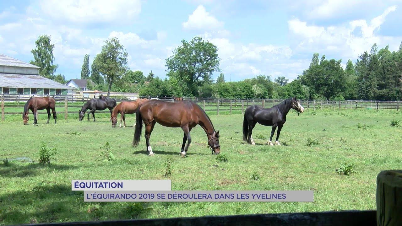 Yvelines | Equitation : l'équirando 2019 se déroulera dans les Yvelines