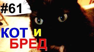 Коты, мечты и бред