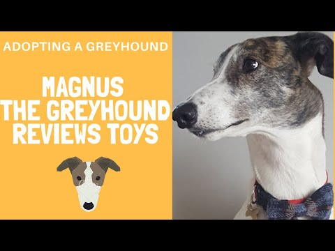 Dog Toys reviewed by Magnus the Greyhound