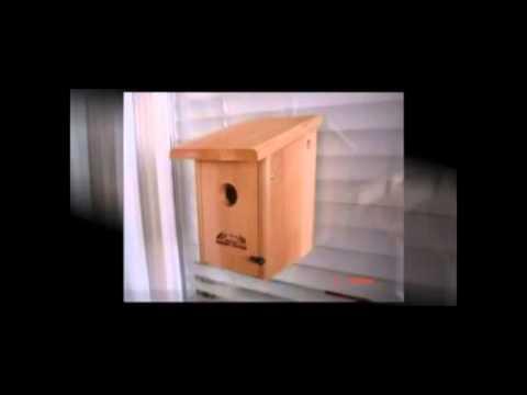 Bird Feeders - Bird Houses | Bluebird Houses, Owl Houses, Bat House, Butterfly House