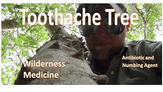 Wilderness Medicine: The Toothache Tree