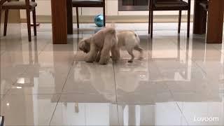 Best interactive pet camera   Dog reaction #10   pet gadget
