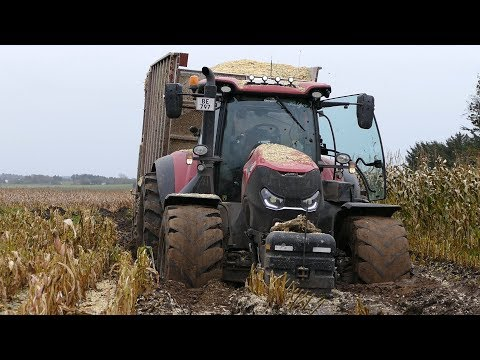 Case IH 300 Optum Working Too Hard During The Maize Season | Wide Tires & Mud | DK Agriculture