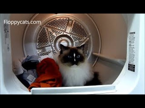 Cats and Clothes Dryers: Ragdoll Cats in a Clothes Dryer Floppycats - ねこ - ラグドール - Floppycats