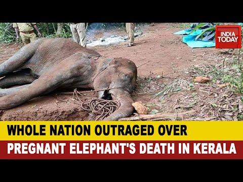 Kerala Pregnant Elephant Death: Prakash Javadekar Says Culprits Won't Be Spared