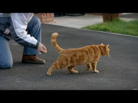 Uncooperative Cat Blooper | Fear Her | Doctor Who Confidential