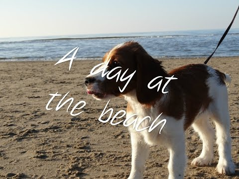 A day at the beach with the dog (1)