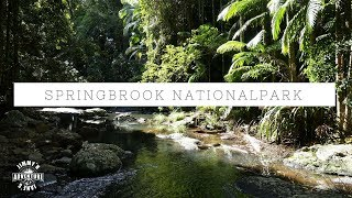 Springbrook Nationalpark/ Australien - Vlog #30