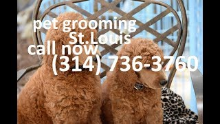 dog grooming st louis | call now | (314) 736-3760