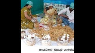 www.tholilvaaipugal.blogspot.com Button Kaalan Valarpu in Tamil | Mushroom Cultivation in tamil