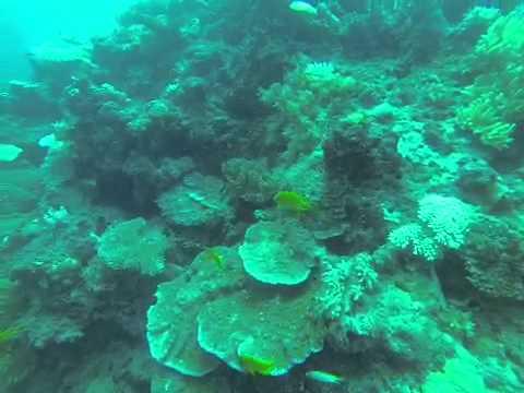 Fiji dive 1 The Zoo vid4