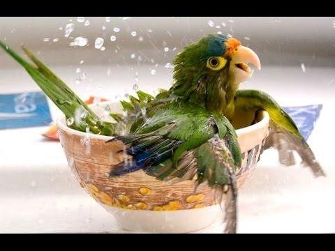 Приколы с попугаями видео -