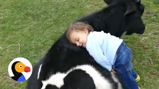 Kid Snuggles with Rescue Cow   The Dodo
