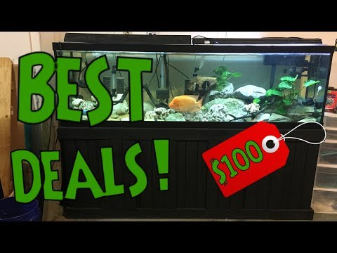 How And Where To Get Cheap Fish Tanks? - MY SECRET TIPS REVEALED