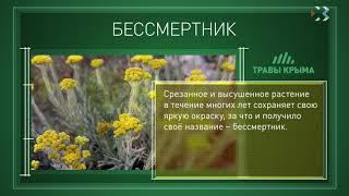 Травы Крыма. Выпуск 10. БЕССМЕРТНИК