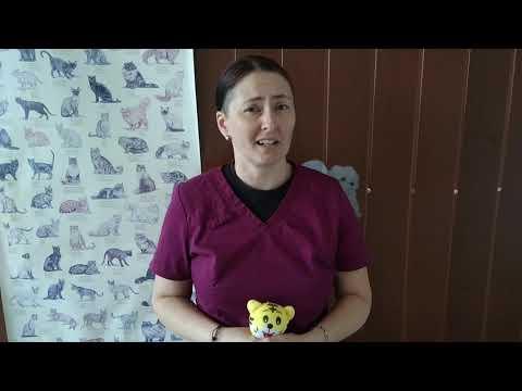 Baixar Perusii s Vlog - Download Perusii s Vlog | DL Músicas