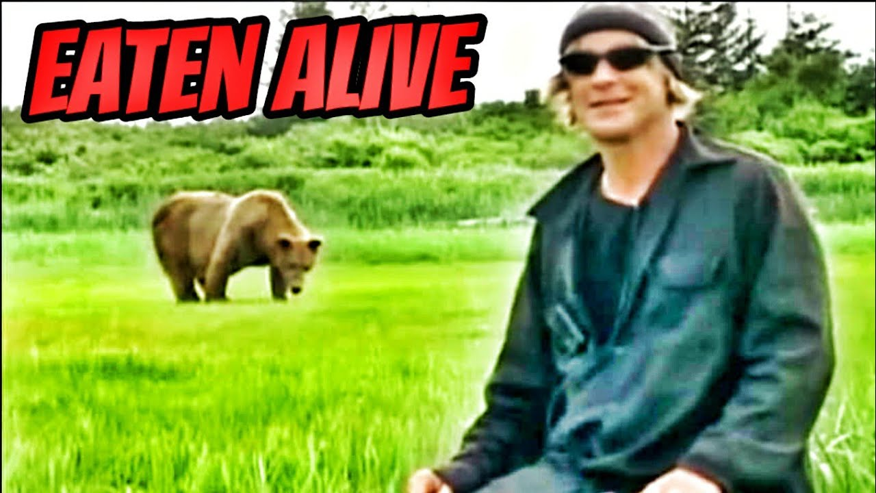 Grizzly Man Eaten By A Bear - Timothy Treadwell - YouTube
