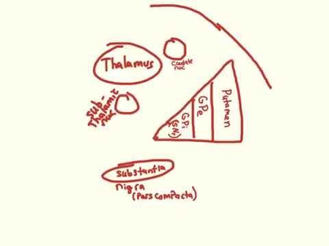 Parkinsons - pathophysiology and Clinical Presentation