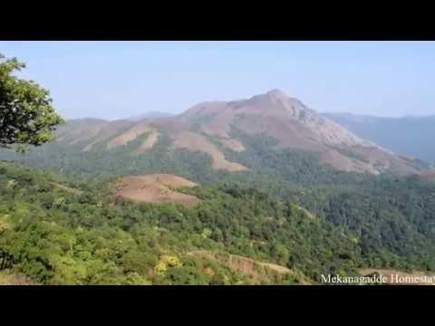 Western Ghats - Mekanagadde Homestay