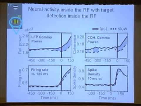 Neural Synchrony and Selective Attention