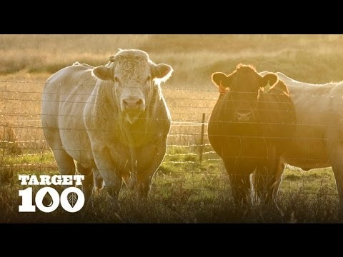Sustainable Sheep and Cattle Farmers in Australia | Target 100