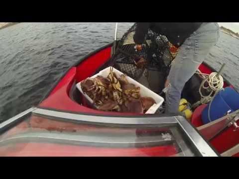 Krabbefiske i Tananger