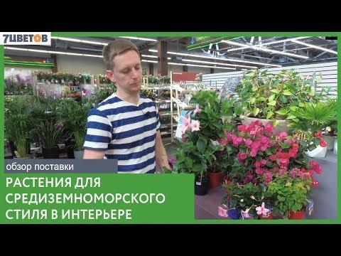 Лучшие растения для средиземноморского стиля в интерьере