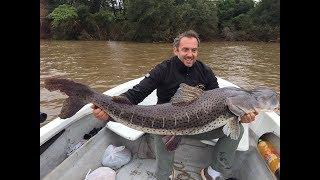 Pesca de Surubi 2017 - impresionante mas de 50 kilos
