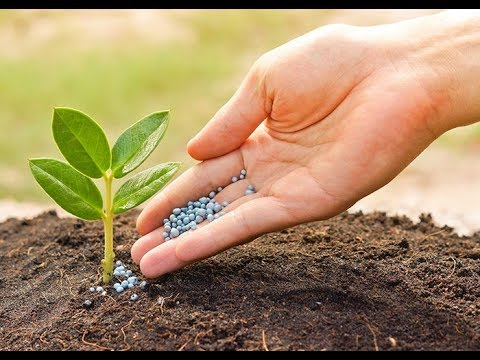 Never Buy Fertilizer Again Instead Make your Own Organic Fer