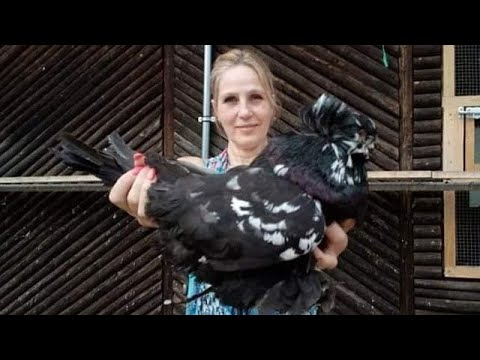 World Most Beautiful Pigeons | Indoor Pigeon Farming | Pigeon Breeding In Cage