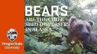 Bears are the chief seed dispersers in Alaska