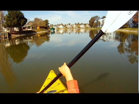 Kayaking in Redwood shores. Bay Area Weekend Trips.