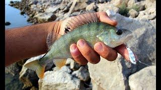 Micro Yemlerle Tatlı Su Levreği Avı / Perch Fishing With Micro Lures