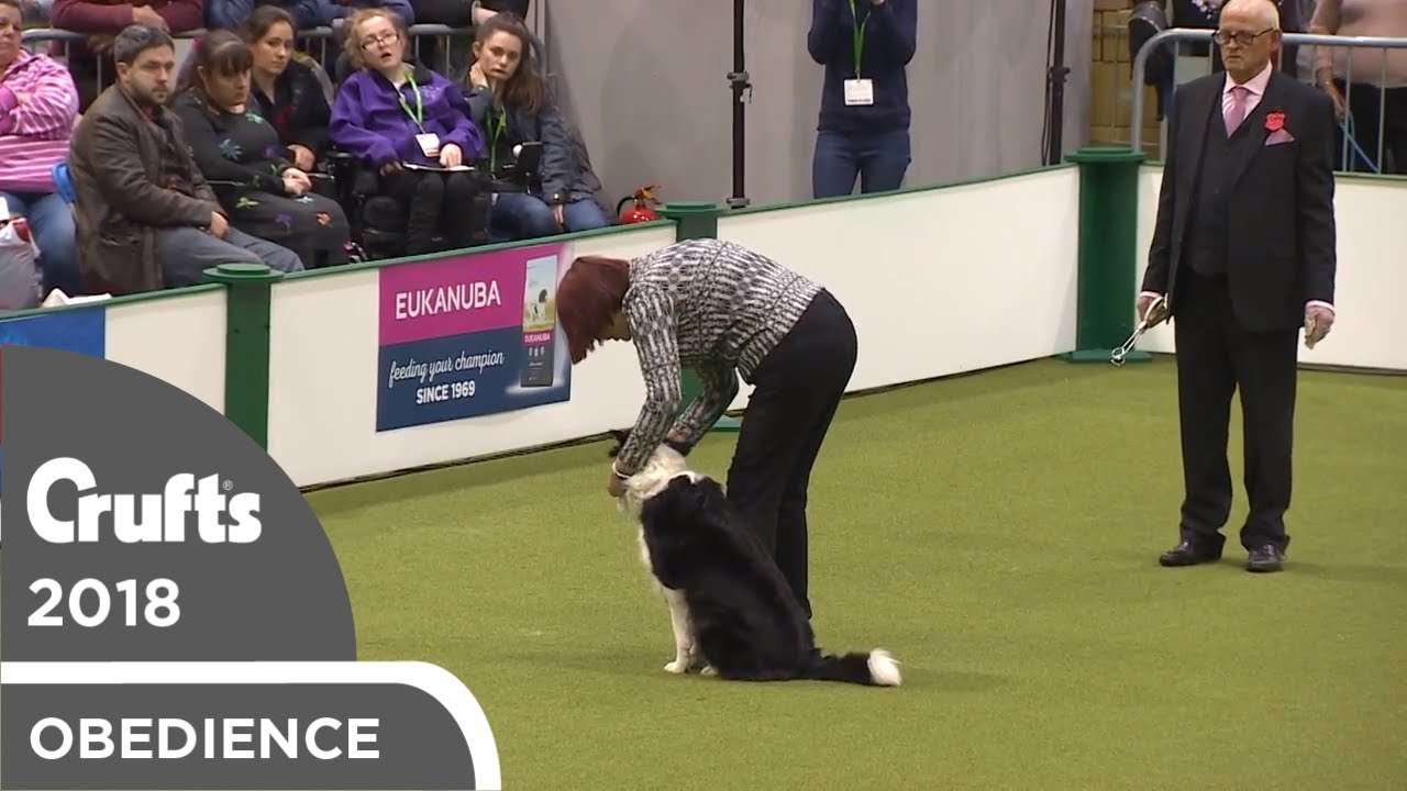Obedience - Bitch Championship - Scents   Crufts 2018