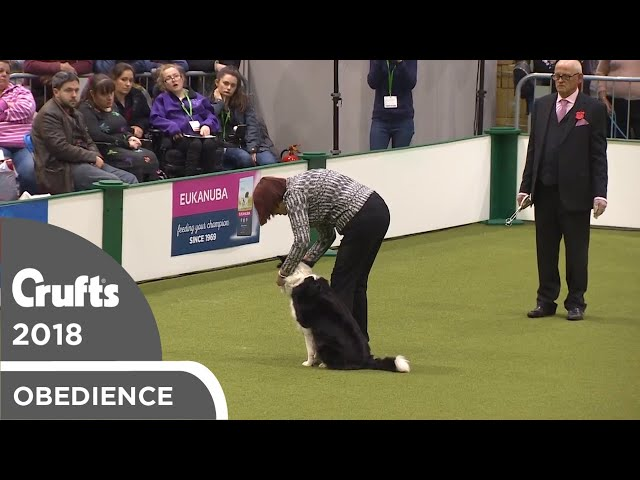 Obedience - Bitch Championship - Scents | Crufts 2018
