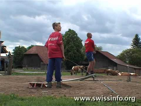 Hornussen - the sport of Swiss farmers