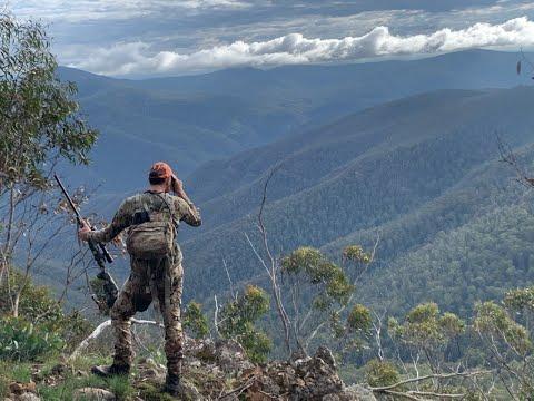 Hunting Sambar deer in Victoria, Australia 3.0