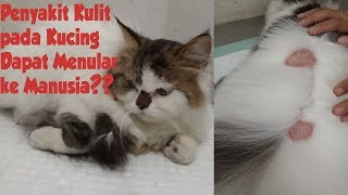 TPCvlog- Jamur pada Kucing?? II Penyakit Kulit pada Kucing Menular ke Manusia!!