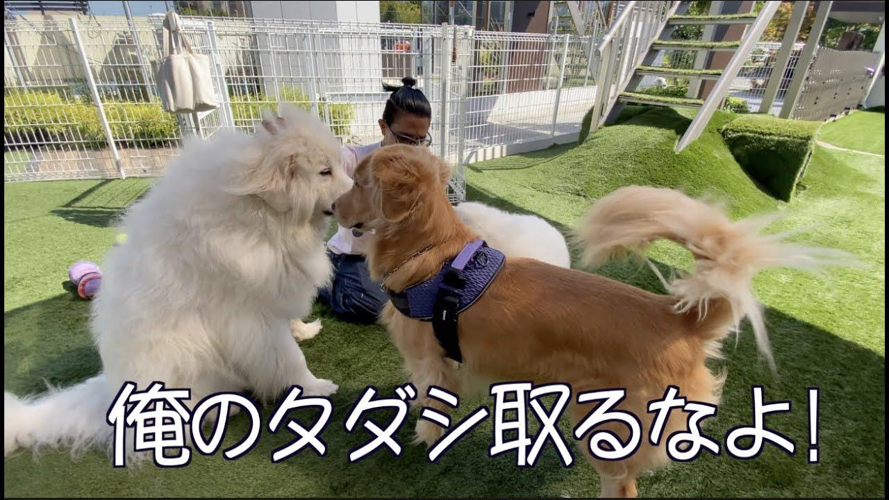 愛犬仲間との久しぶりの再会(前編)