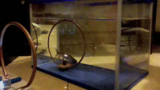 transfer daya listrik di air (wireless power transfer in Aquarium).m4v
