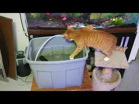 Westly makes his weekly inspection of FishTV infrastructure maintenance.