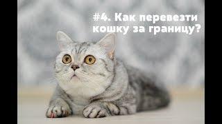 #4. Як перевезти кішку за кордон?