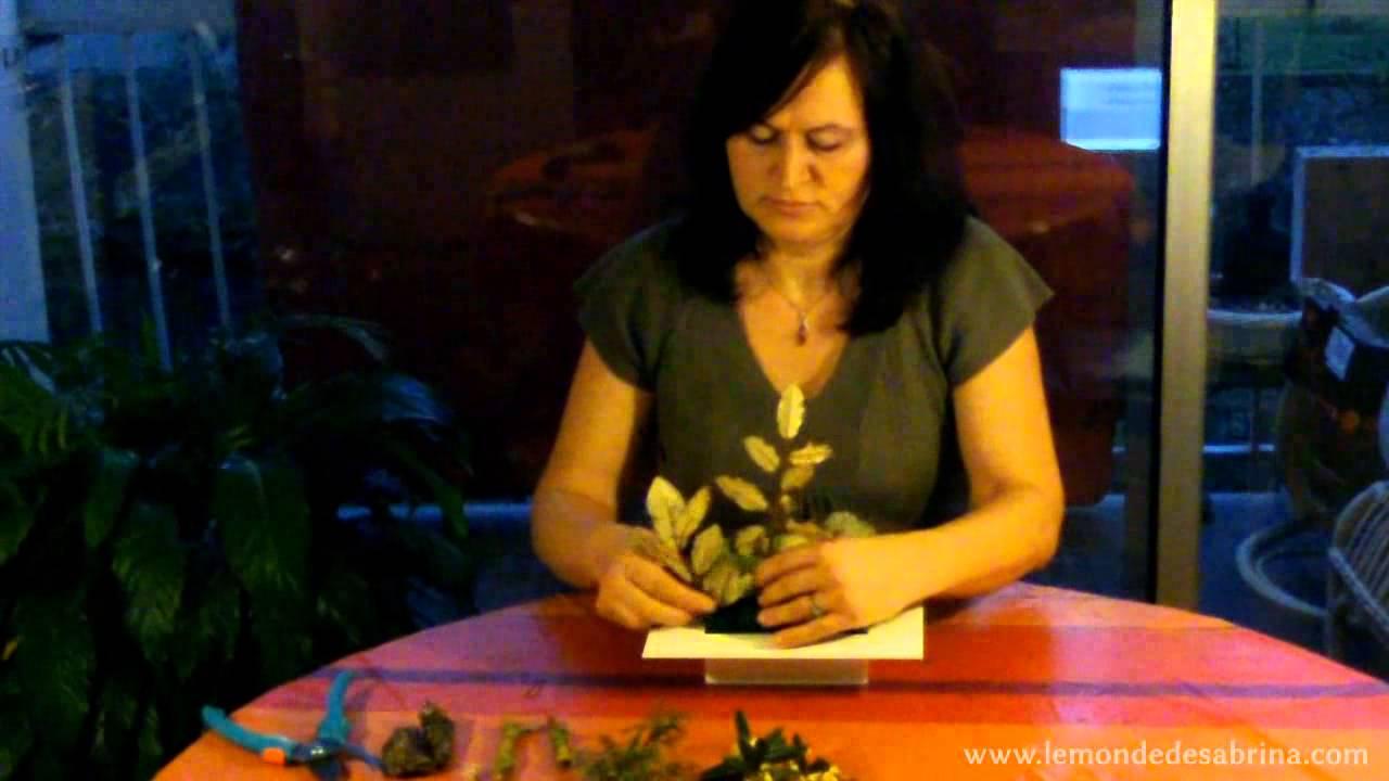 Jardin zen miniature le monde de sabrina youtube for Jardin zen miniature