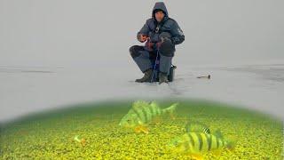 Лишь бы не сошел Зимняя рыбалка 2021 Ловля окуня на мормышку и балансир