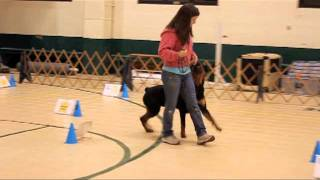"Alpha & Omega's Accept Nothing Less 11.22.11 ""callen"" Rottweiler Rally"