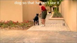 How to help dogs that bark and lunge at other dogs when on a lead