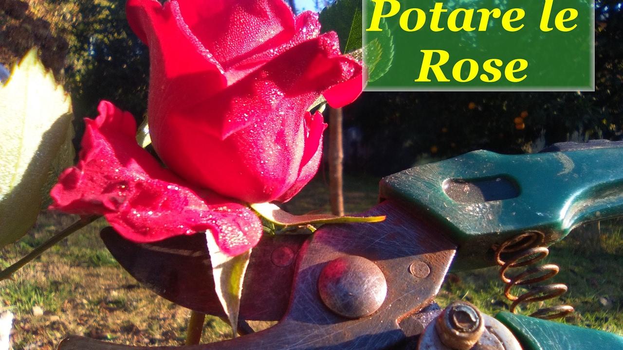 Potare le rose youtube for Potare le rose