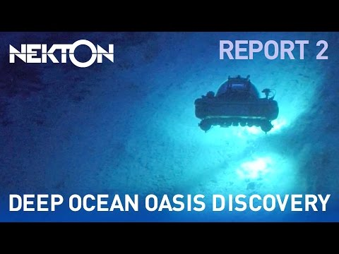 Oceanic oasis discovered | Mission Report 2 | Nekton Mission