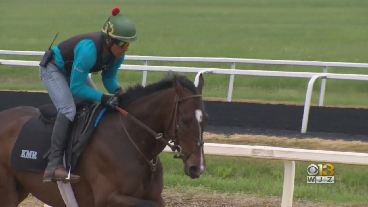 what horses are running in the preakness