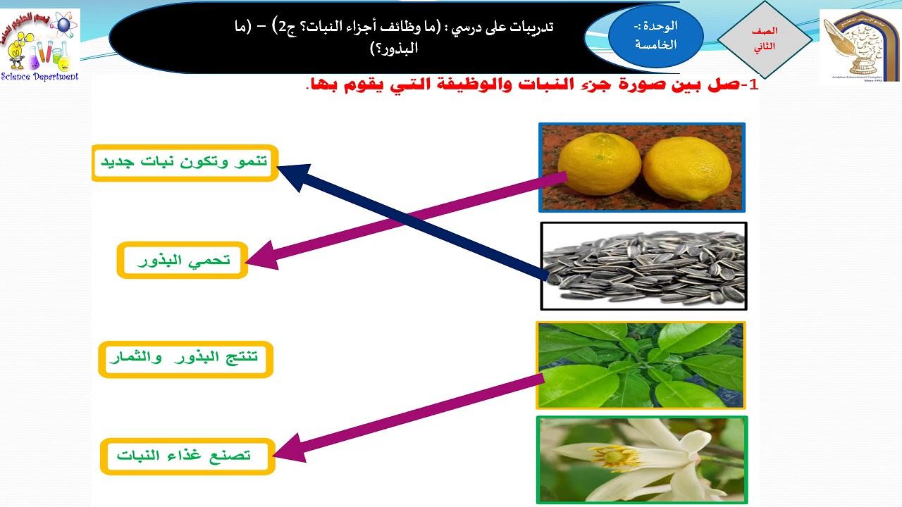 Photo of الصف الثاني الدرس الثامن تدريبات على درسي ما وظائف أجزاء النبات ج2   ما البذور – وظائف